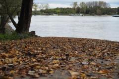 Herbst an der Groov