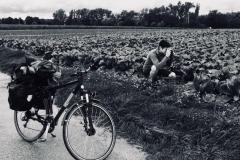 Foto - Kraut und Rüben Radweg