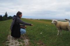 Futter - für uns und die Schafe