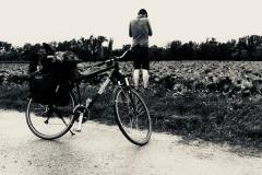 Foto die Zweite - Kraut und Rüben Radweg