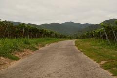 Felder auf der Weinstraße