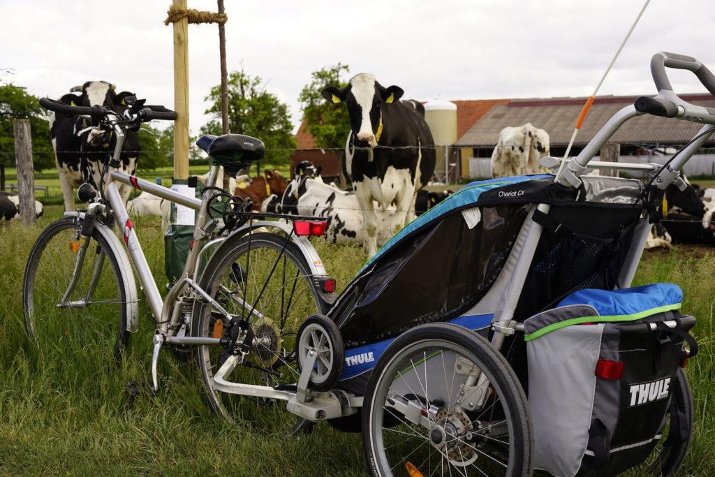 Fahrrad vor einer Kuhwiese im Münsterland